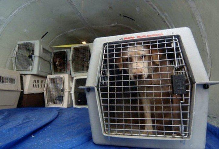dierenasielen en opvang honden en katten in belgie