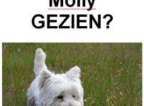 wie heeft molly gezien