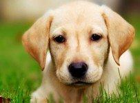 hond eet gras