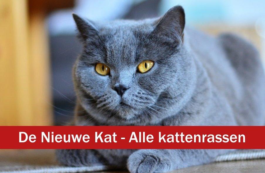 kattenrassen - de nieuwe kat